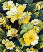 primrose f.08