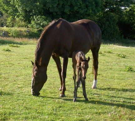 horse fecpak