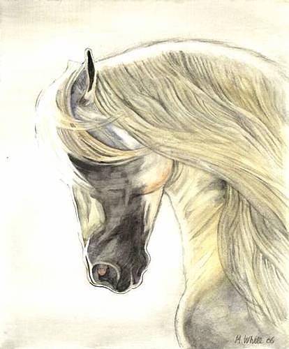 Horse Head Cream
