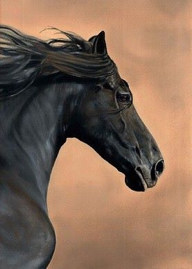Limited edition print - Black Horse