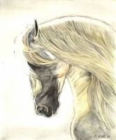 Limited edition print - Spanish horse