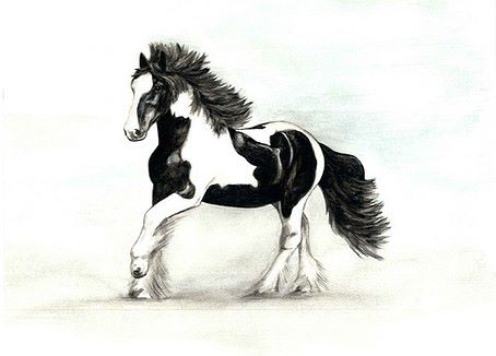 Limited edition print - Cob Horse