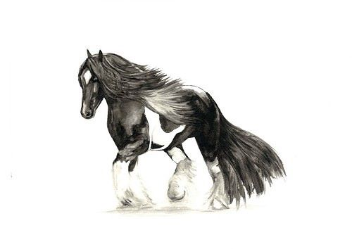 Limited edition print - Gypsy Cob Horse