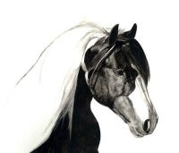 Limited edition print - Cob Horse head