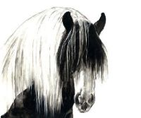 Limited edition print - Gypsy Cob Horse head
