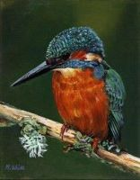 Limited edition print - Kingfisher