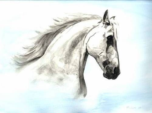 Limited edition print - Horse head