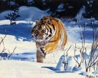 Limited edition print - Tiger