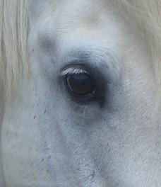 Dixon Eyelashes
