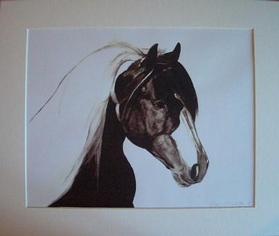 Gypsy Cob Fine Head Mounted
