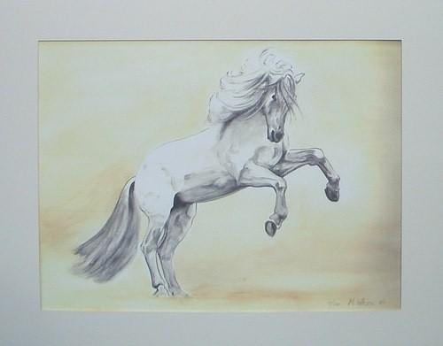 Rearing Horse Mounted Final