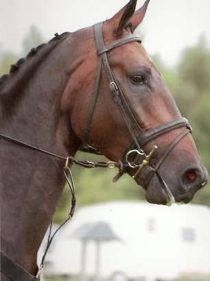 Dressage Horse Photo