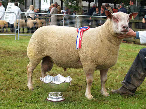 Royal Show Breed Champion 2007