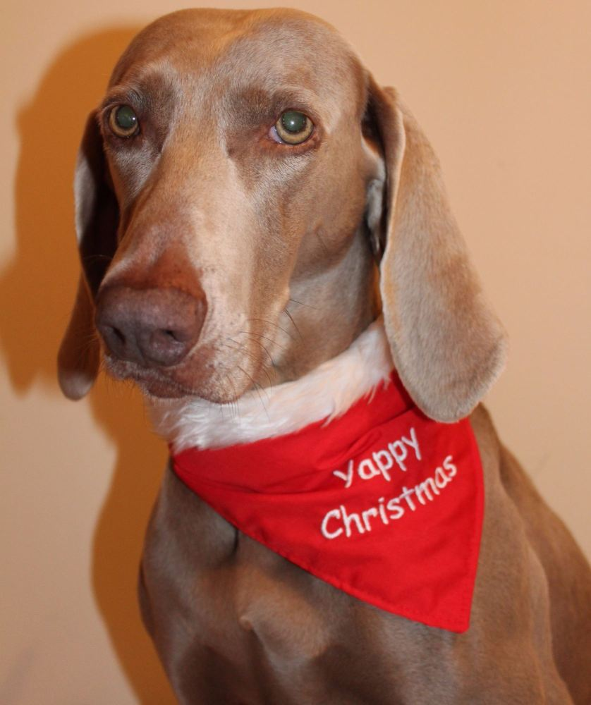 Christmas Dog Bandanas Dog Scarves Dog Neckerchiefsw