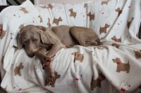 'Maddy Paws' double sided fleece Dog Blanket
