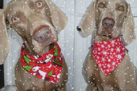 Christmas Collars & Bandanas and Gift ideas