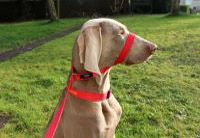 Figure-of-8 Dog Leads -- Training Leads