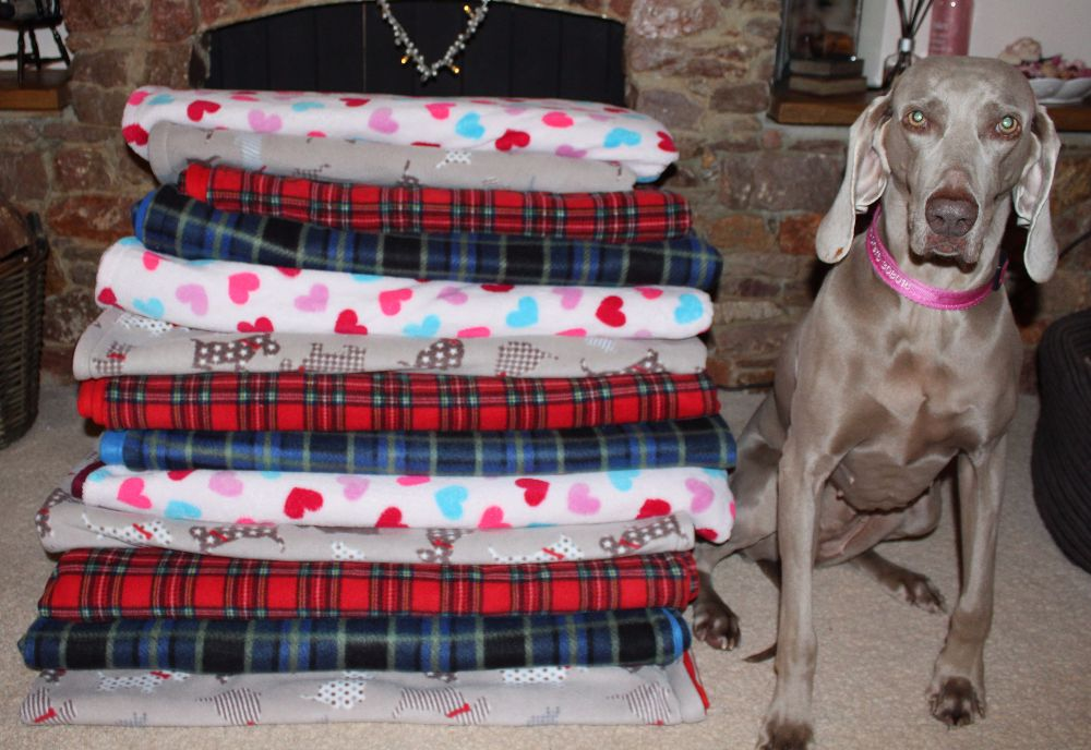 'Maddy Paws' double sided fleece Blanket