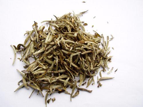 Ying Zhen Silver Needle