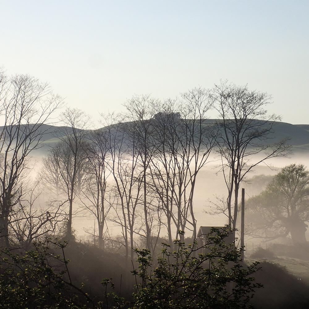 back fog