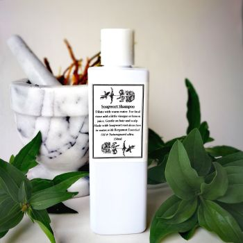 Soapwort Shampoo 250mL Bottle