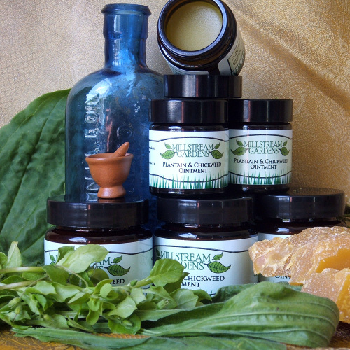 Plantain & Chickweed Ointment