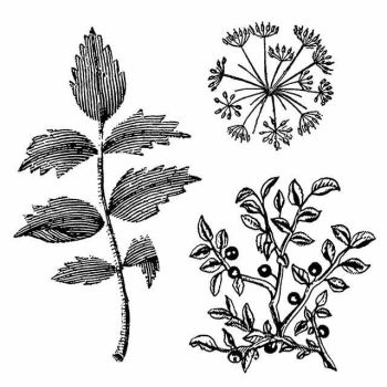 HD Natural Rubber Stamp cm. 10x10 Herbarium