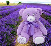 15cm-one-piece-new-purple-lavender-font-b-teddy-b-font-font-b-bear-b-font