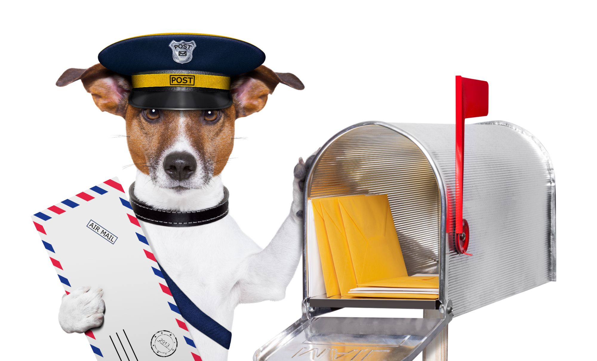 Dog at Mail Box With Mail