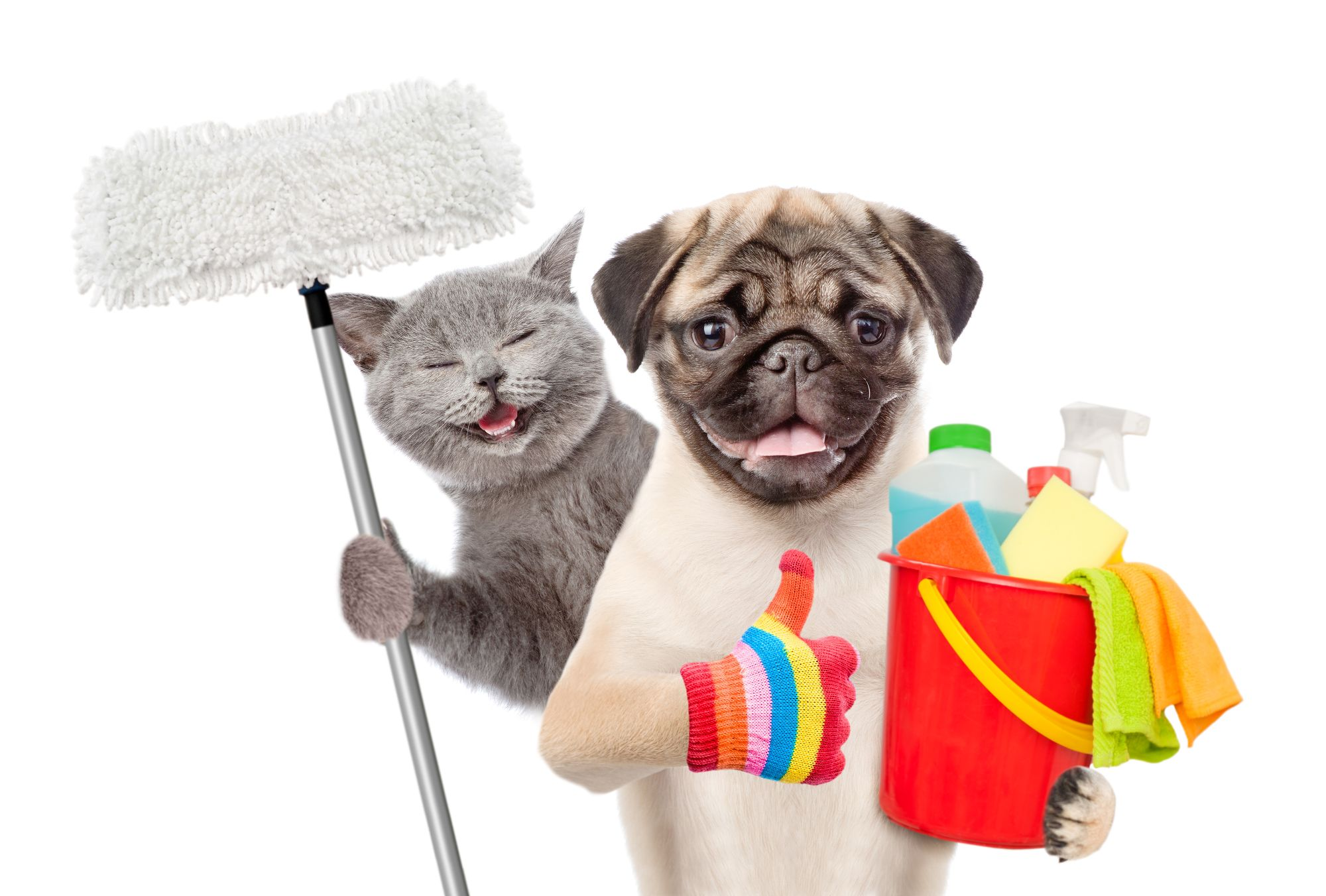 Dog & Cat with Cleaning Equipment