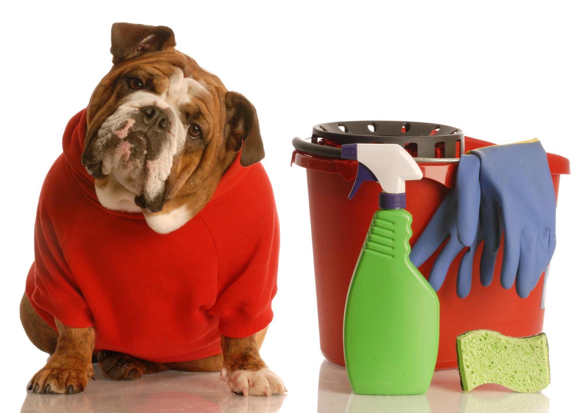 Dog with cleaning equipment & supplies