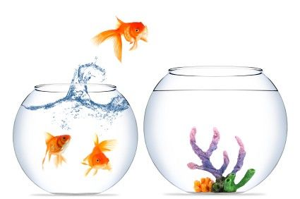 goldfish-jumping-into-empty-bowl