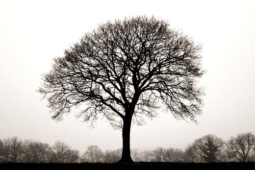 Talisman Energy Tree