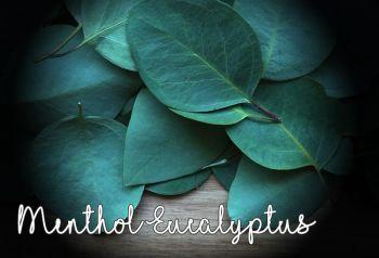 Menthol Eucalyptus