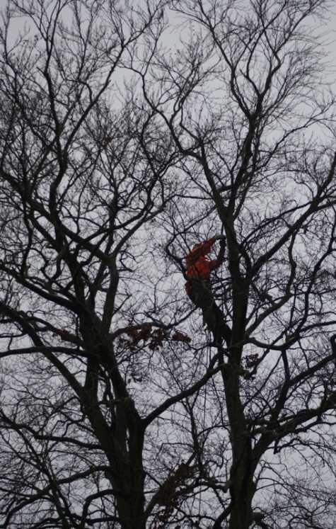 tree_suregeon1