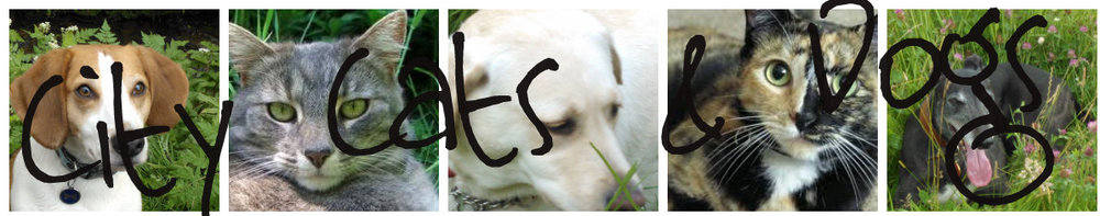 City Cats & Dogs, site logo.