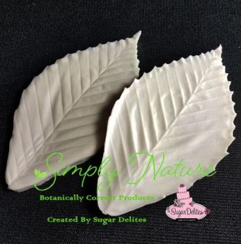 Authentic Veiners Beech Leaf Large