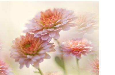 Edible ImageArt: Meadow Sweet Topper