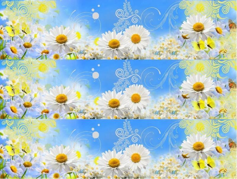imageart daisy blue. wrap.