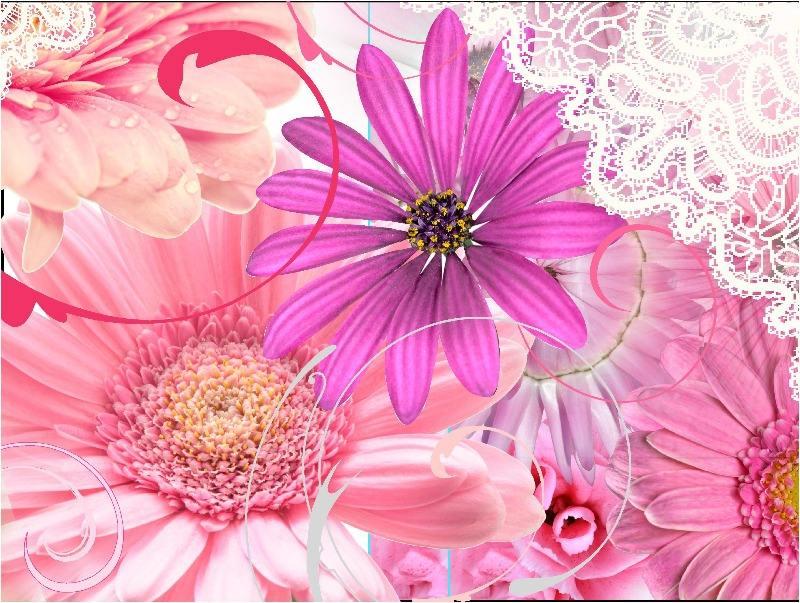 imageart summer pink top_1