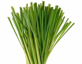 Lemongrass Cosmetic Fragrance Oil