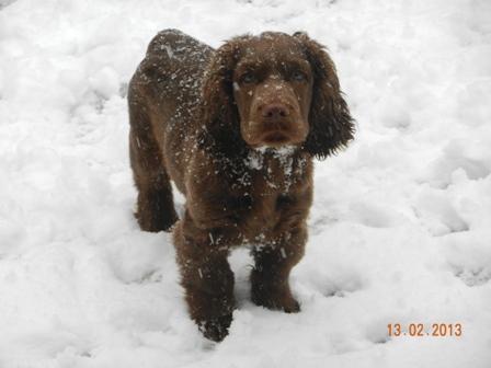 micky in snow 1 w