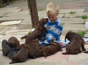 jack & pups