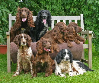at deakin spaniel group