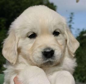 flury as a pup
