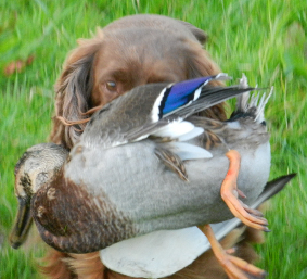 twig at 13 half with duck