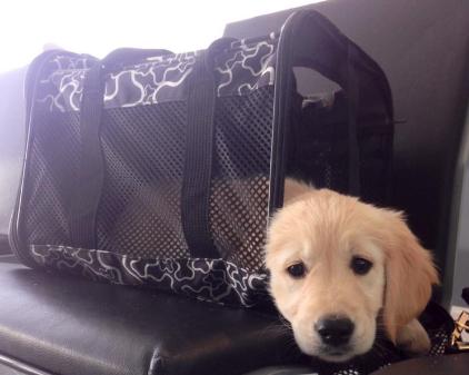 sunny in travel bag