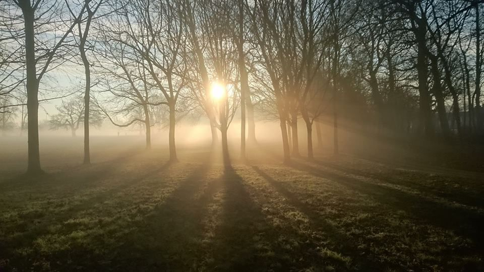 Beddington Park - 24.01.16