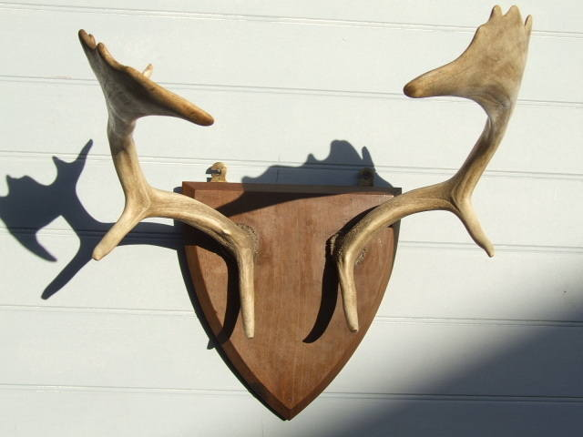 antlers on shield