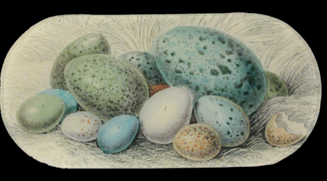 Spring 18: 33 OS-Blue-Eggs_large